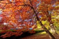 京都の紅葉2017 京都御苑の秋 - 花景色-K.W.C. PhotoBlog