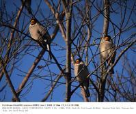 2018.3.3(1) - 鳥撮り遊び