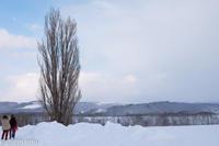 ケンとメリーの木~2月の美瑛の雪景色 - My favorite ~Diary 3~