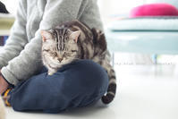猫と部屋着の休日 - sky blue drop~14ニャンズトネコハウス//