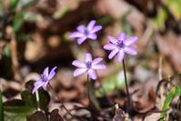 季節の花でも - 季節の映ろひ