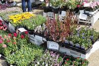 ひめじ緑いちに、植物園も出店中です - 手柄山温室植物園ブログ 『山の上から花だより』