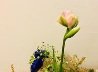 咲きそうです‼︎ - Bd-home style