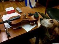 バイオリンのお稽古ターシャ興味津々 - 湖畔に暮らすミュージシャンと愛犬ハンク/ターシャの日記