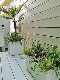 観葉植物の寄せ植えのあるテラスガーデン - 緑のしずく (ベランダガーデン便り)