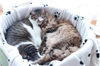 しまい忘れて眠る猫 - きょうだい猫と仲良し暮らし