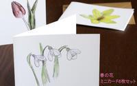 春の花 ミニカードにメッセージをそえて - ブルーベルの森-ブログ-英国のハンドメイド陶器と雑貨の通販
