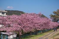 美和桜 - Change The World