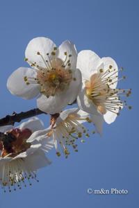 八分咲きに - 季節のおくりもの