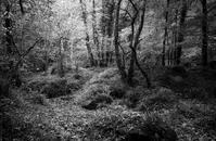 Teign Valley - No Man's Land
