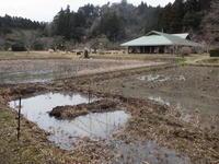 寒さ戻る。草花は、春へと、、 - 千葉県いすみ環境と文化のさとセンター
