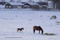 のどかな牧場の朝です。 - ekkoの --- four seasons --- 北海道