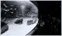 Fish tank - コバチャンのBLOG