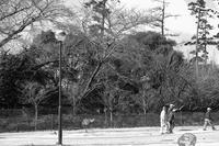朧月月 寫誌 ⑧ 染井吉野はまだ… - le fotografie di digit@l