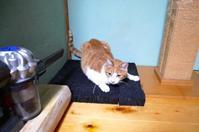 花組ちぃちぃ - ご機嫌元氣 猫の森公式ブログ