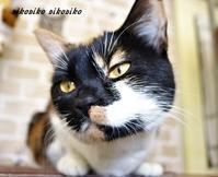初めての猫カフェ - 今が一番