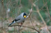 公園の野鳥たち - 瑞穂の国の野鳥たち