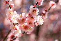 春は直ぐそこ(1) - 一人の読者との対話