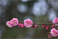 梅・すずめタン。 - Season of petal