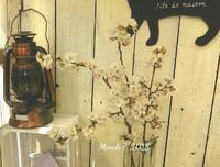 桜…咲きました。 - 手作り雑貨&観葉植物 kinomi