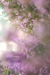 春の音♪ - jumhina biyori*