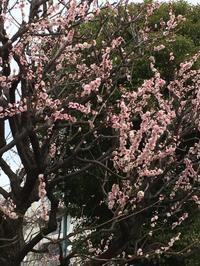 エンボディ®[3月・4月(2018)のレッスンスケジュール] - Me ke aloha ~緩やかEMBODY生活