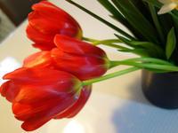 枯れ際の花★絹の光沢 - 月夜飛行船
