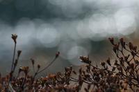 君の面影に似て - 風の彩り-2