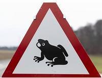 カエルさんが通る - ヘルヴェティア備忘録―Suisse遊牧記