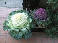 """極寒の3月.... - 〔家庭菜園日記〕 """"すろーらいふ"""" 茅ケ崎のはまちゃん. 野菜つくり"""