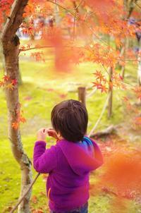嵐山の紅葉 - 息子と写真がすき。
