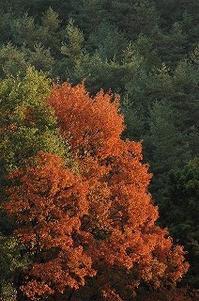 しっとり 紅葉と黄葉 - 空ヤ畑ノコトバカリ