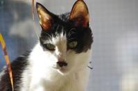 ズズさんに思いを込めて - ご機嫌元氣 猫の森公式ブログ