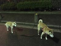 犬の食育講座 - 小鉄と斗和の親子日記