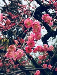 京都を楽しむ - Something Sweet