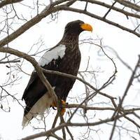 大迫力 - 綺麗な野鳥に遭いたくて
