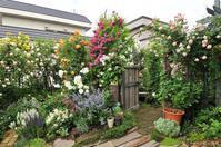 白い蔓薔薇の有る風景 - 彼とカヲリの庭の関係
