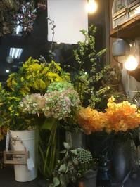すっきりとしたステムが美しい【ブルビネラ】が入荷 - ルーシュの花仕事