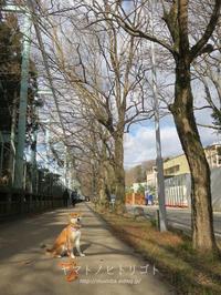 1月の雑記録&写真の断捨離【フォトムービーあり】後編 - yamatoのひとりごと
