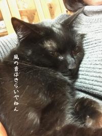 カミナリコワイ - gin~tetsu~nosuke