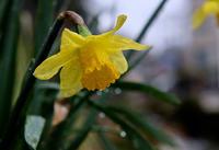 春の雨は冷たくて - 空のむこうに ~自転車徒然 ほんのりと~