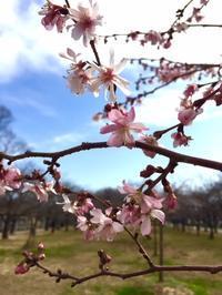 春の精霊を迎える - モデラートカンタービレ 大阪 タロット 数秘術 カラールネーション ヒプノセラピー 西洋占星術