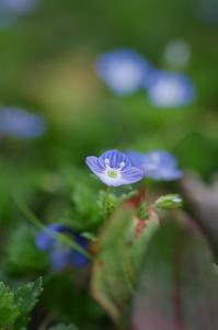 春近し - akiy's  photo