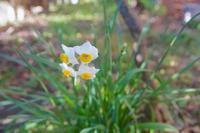 三月日記:『花を愉しむ事典』(J. アディソン著) - 世話要らずの庭