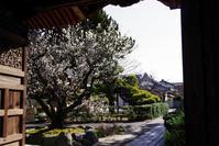 古木がある寺 - 日本の原風景を訪ねて・・