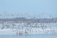 塒立ち - ひとり野鳥の会