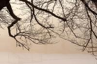 霧氷桜 - 但馬・写真日和