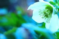 追憶の花 - 美は観る者の眼の中にある