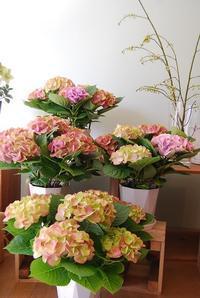 花鉢や花苗、少し春めいてきましたね。 - 花と暮らす店 木花 Mocca