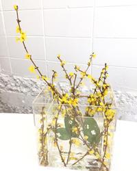 レンギョウとレモンリーフ⁈ - **おやつのお花*   きれい 可愛い いとおしいをデザインしましょう♪